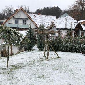 Winter_1_2020